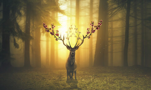 Great Red Deer